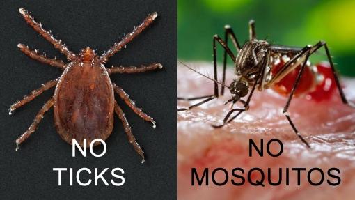 No Ticks, No Mosquitos